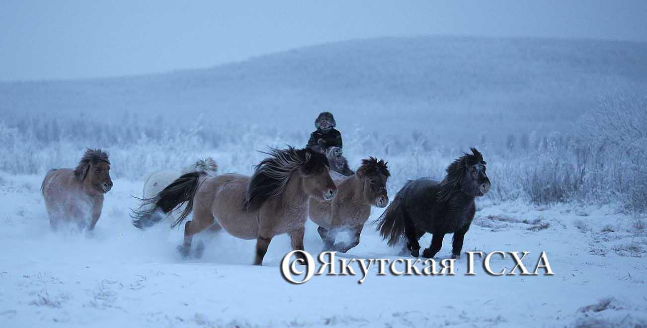 В республике впервые празднуется День коневода