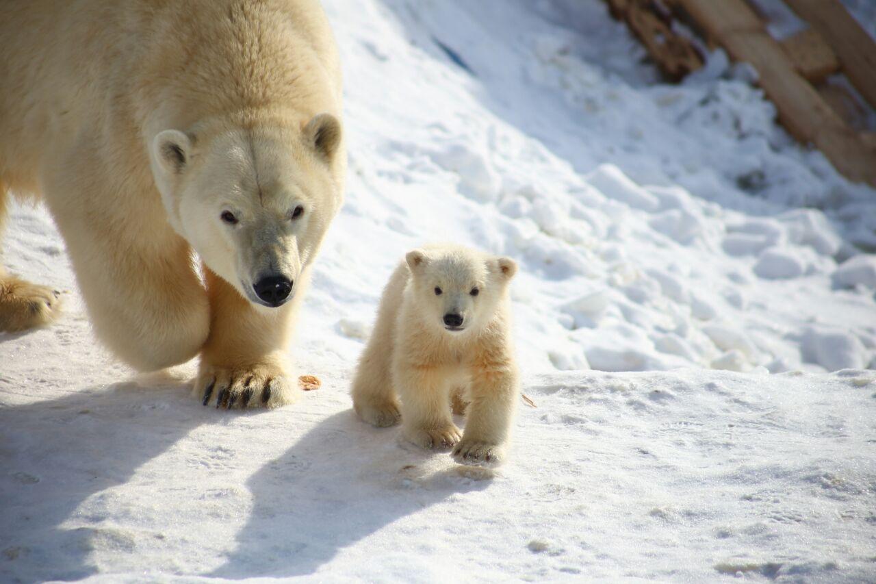 Зоопарк «Орто дойду». Дети просят оставить медвежонка в Якутии