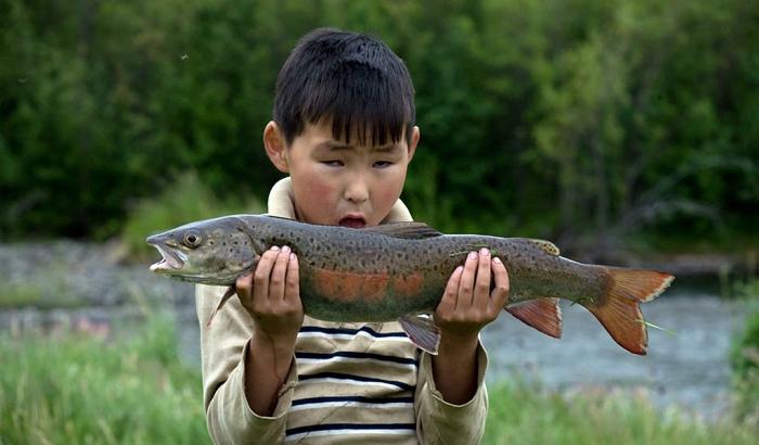 Парадокс: На севере Якутии дети недоедают рыбы