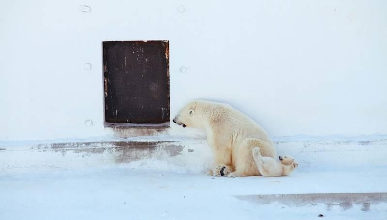 Медвежонок остается с Колыманой до года