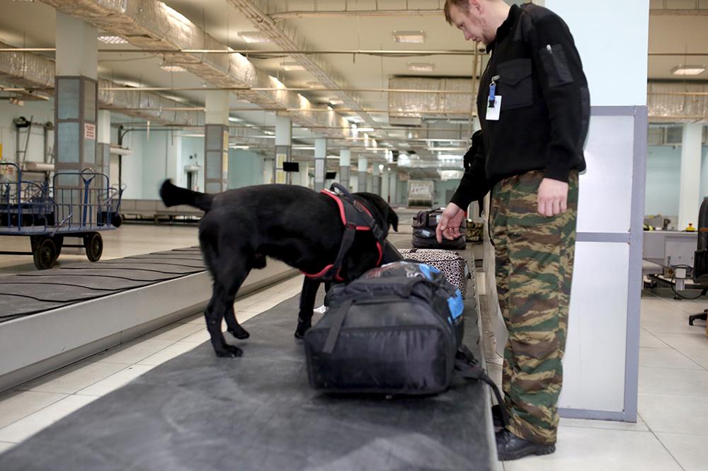 Кинологи аэропорта «Якутск» получили сертификаты, подтверждающие эффективность в поиске взрывчатых веществ