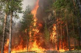 МЧС напоминает: в ряде районов на территории республики действует особый противопожарный режим