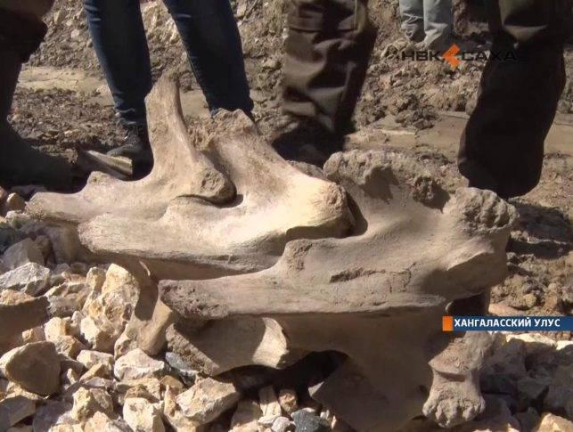 В Хангаласском районе обнаружили останки древнего животного