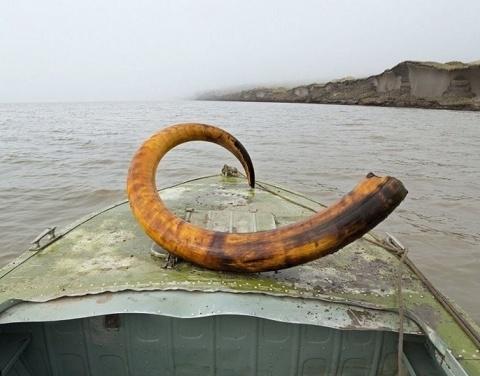 Вопросы добычи останков мамонтовой фауны обсуждены в правительстве Якутии
