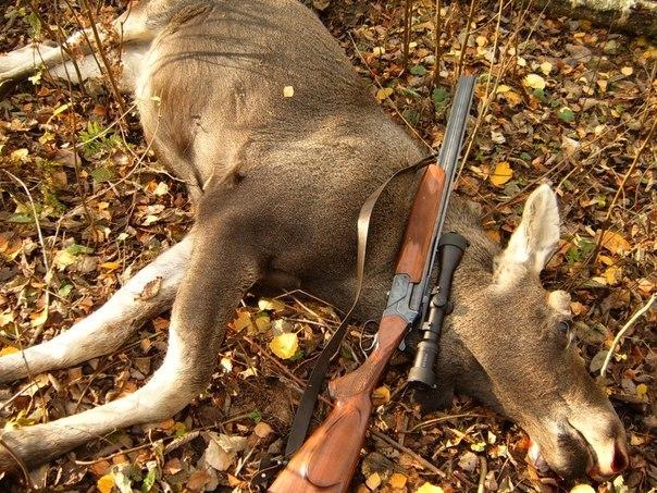 Исправительные работы ждут двух браконьеров, убивших пятерых лосей