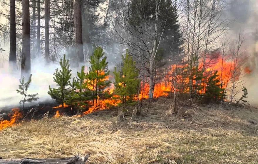 В Якутии выявлены семнадцать лиц, причастных к возникновениям лесных пожаров