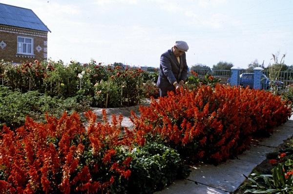 Принятый Госдумой во втором чтении законопроект о садоводстве открывает для граждан новые возможности