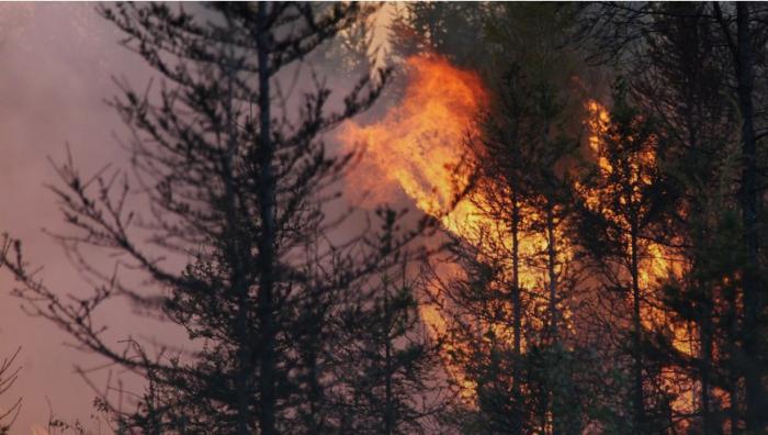 Власти Якутии ответили на обвинения в бездействии при тушении лесных пожаров