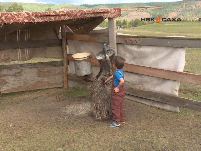 В Якутске вторую неделю ищут страуса по имени Женя