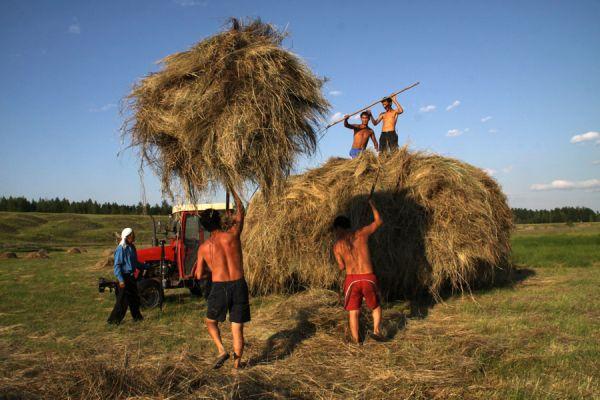 На сегодняшний день план по заготовке сена выполнили Жиганский и Сунтарский районы