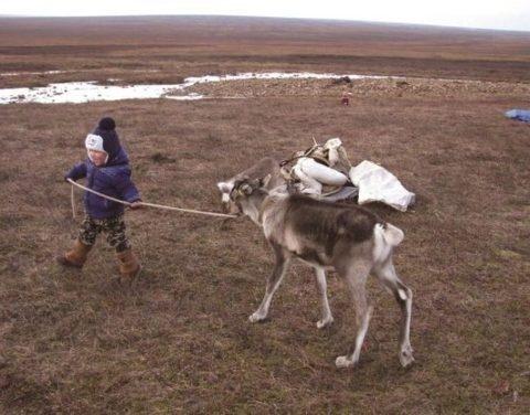 Жизнь молодой семьи оленеводов в бескрайней тундре