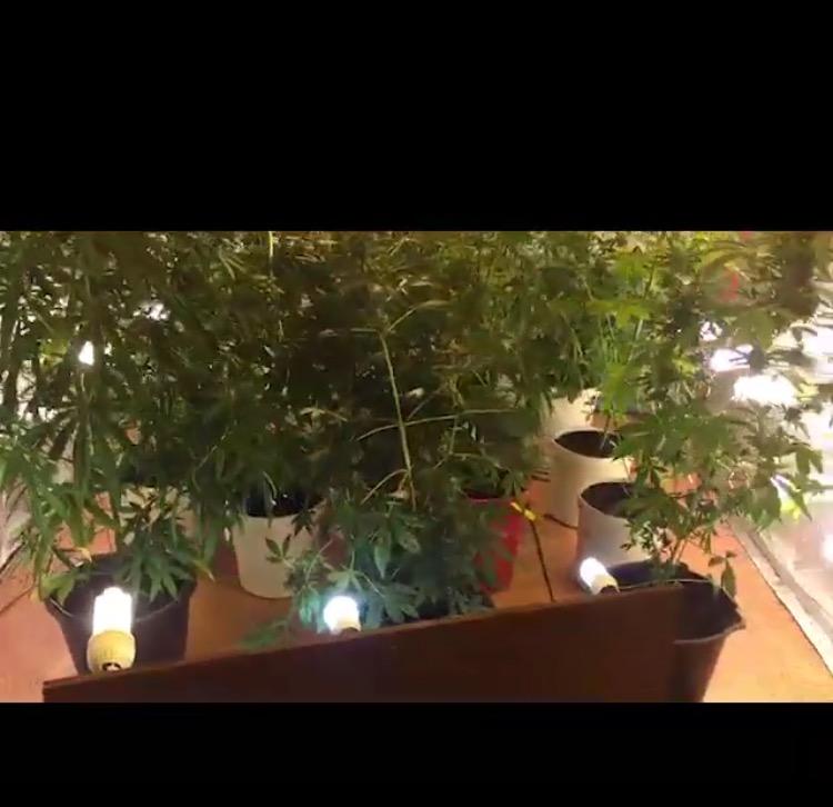 В Якутии полицейские задержали мужчину, выращивавшего коноплю в частном доме