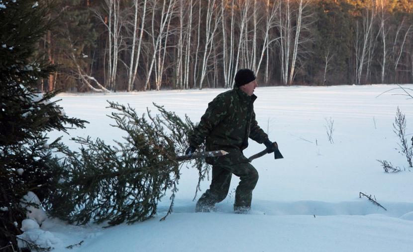 За незаконную заготовку новогодних елок в Якутии будут штрафовать и привлекать к уголовной ответственности