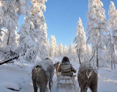 Эксперты СВФУ составили «морозоустойчивое» меню, чтобы выдержать холода в Якутии