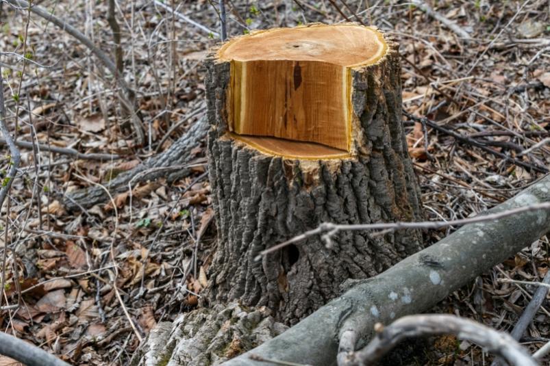 При строительстве дороги в Якутии незаконно вырубили лес на 1 млн рублей