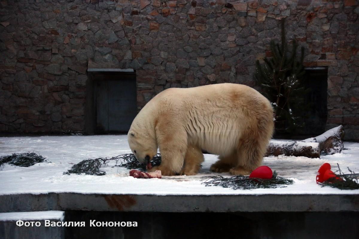 Хаарчаана стала символом дружбы между Якутией и Санкт-Петербургом