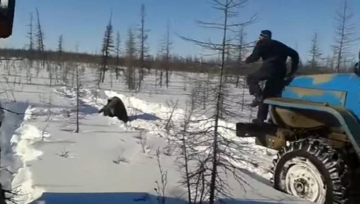 В Якутии вынесли приговором вахтовикам, задавившим медведя УРАЛом