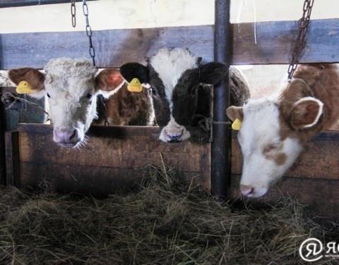 Сельскохозяйственные показатели в Намском улусе продолжают расти