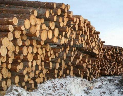 Егор Борисов о переработке древесины: «Наши условия очень жёсткие, сырьё вывозить мы не дадим»