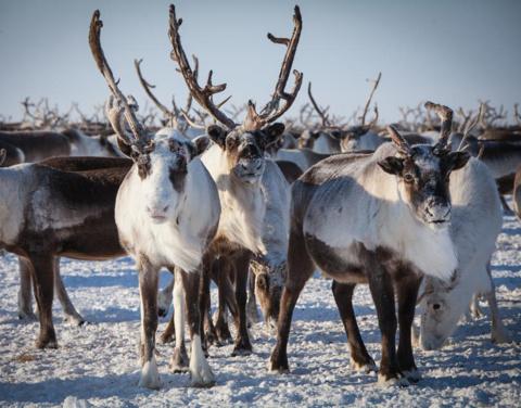 В госпрограммах Якутии появятся отдельные арктические разделы