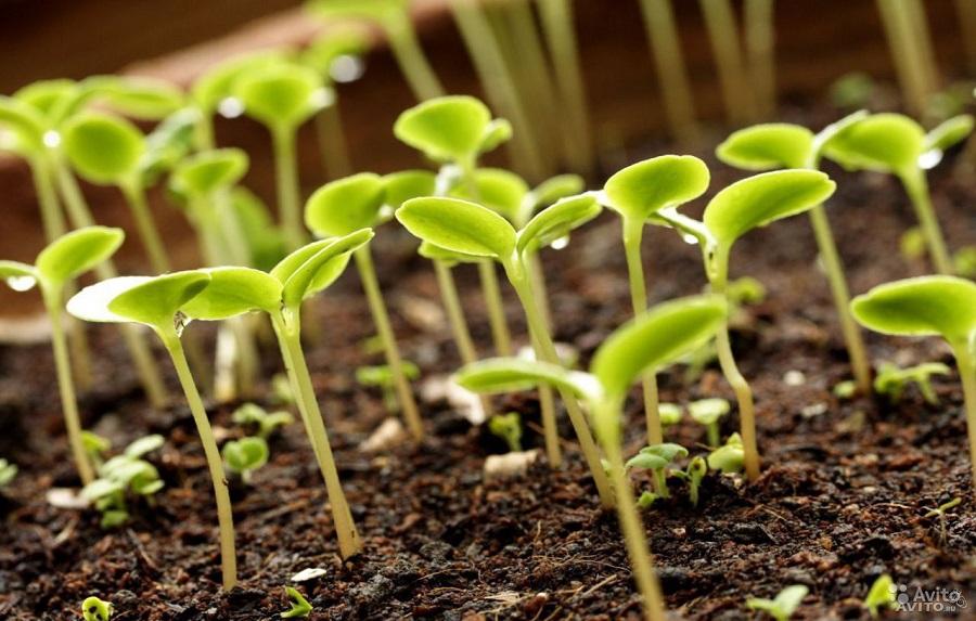 Нюрбинский район вошел в республиканскую программу растениеводства