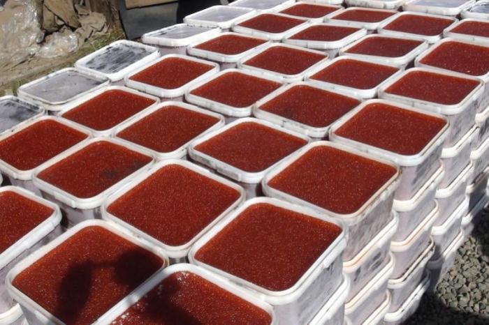 В Якутии изъяли почти пять тонн лососевой икры, непригодной к употреблению