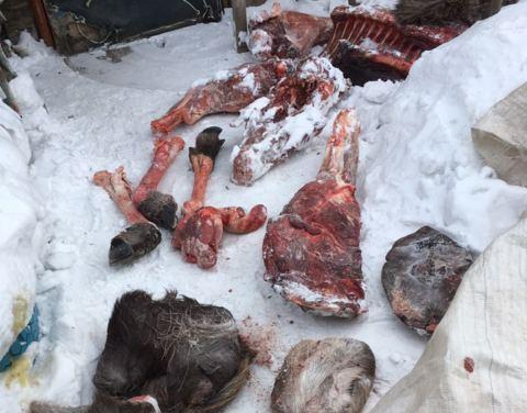 В Олекминском районе браконьер возместил 240 тыс. руб. ущерба