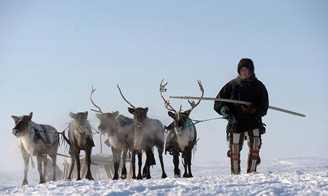 Около 100 маршрутных и передвижных домиков для оленеводов построят в Якутии за пять лет