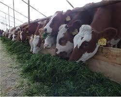 Перспективы агрономия в криолитозоне