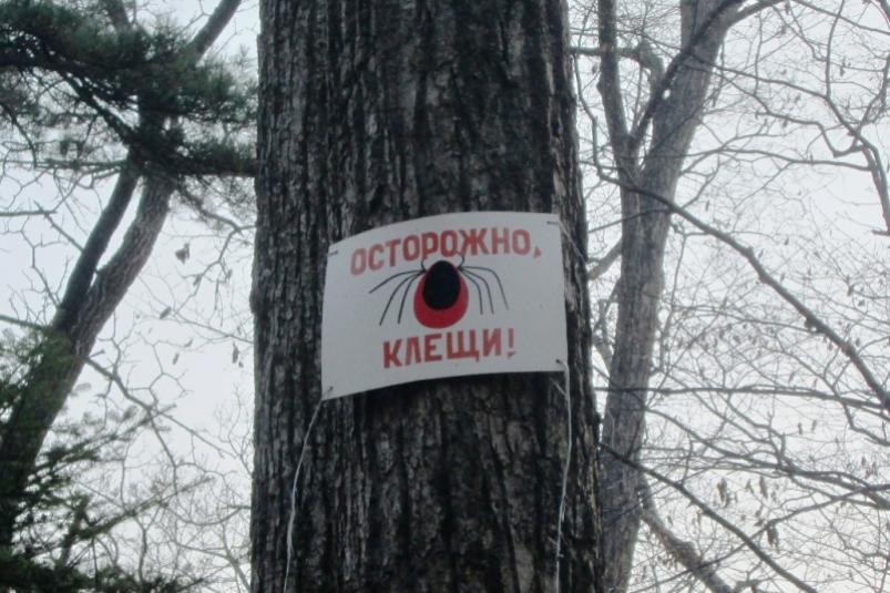 Более 60 человек подверглись укусам клещей в Якутии