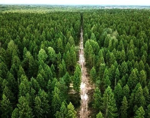 Оперативная информация о лесных пожарах на утро 2 августа