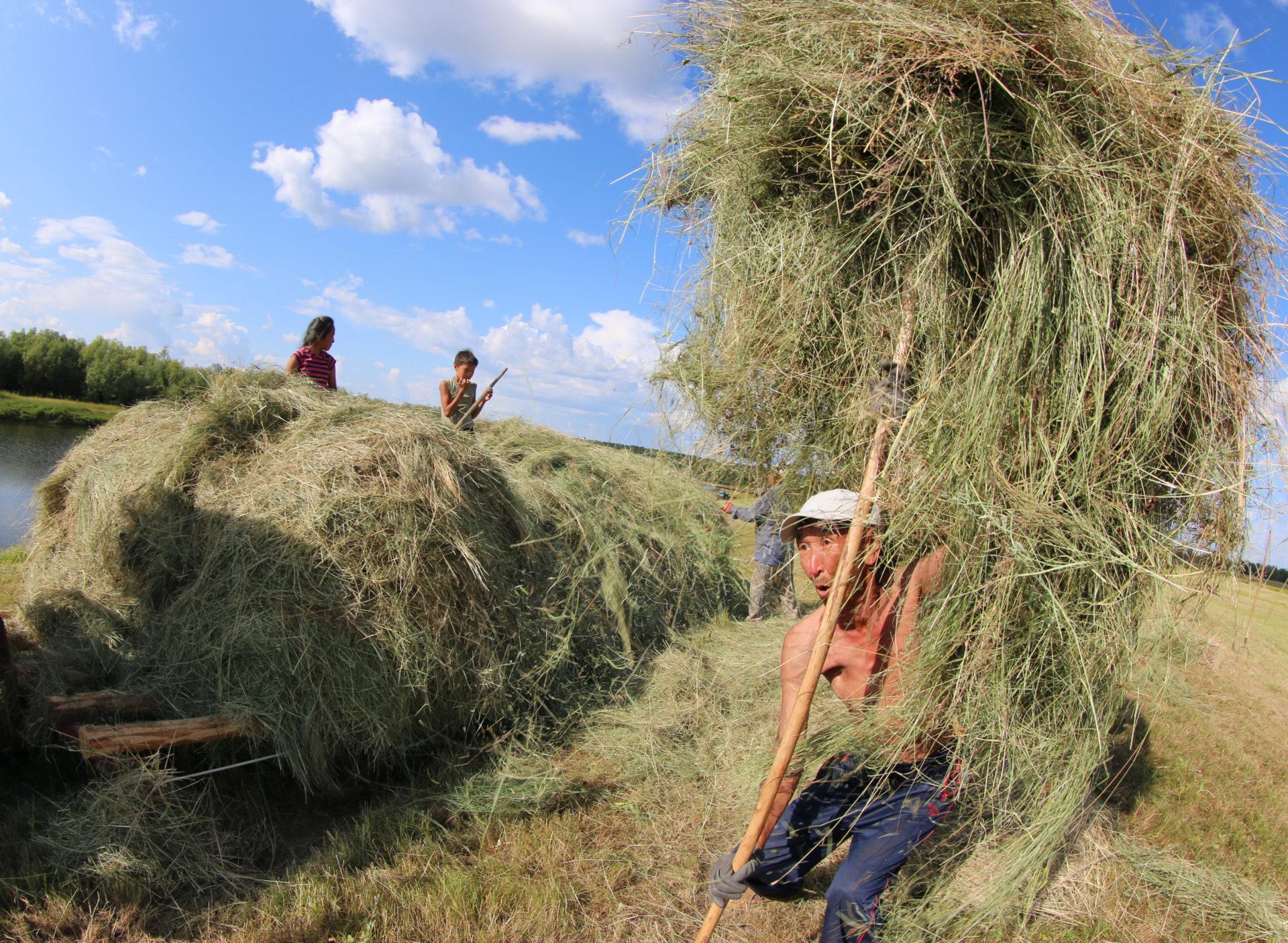 Сельское хозяйство в цифрах