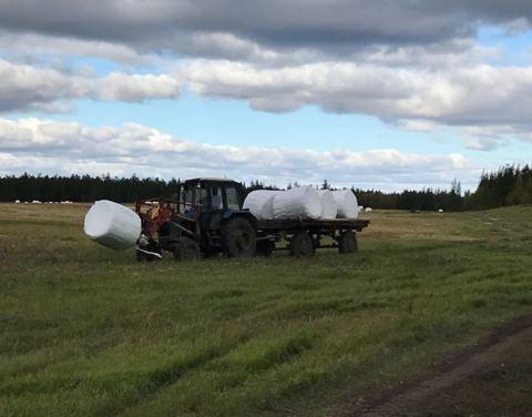 В Якутии завершается кормозаготовительная кампания
