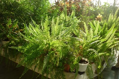 «Ректор хочет ликвидировать уникальную оранжерею Ботанического сада СВФУ»
