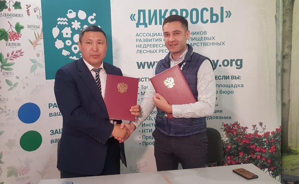 Якутский кооператив дикоросов в этом году планирует продать 90 тонн брусники