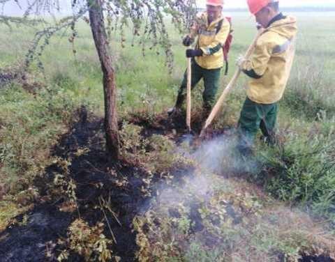 Оперативная информация о лесных пожарах на 16 июля