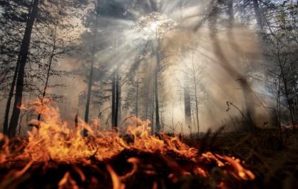 В Нюрбинском районе усилены меры для ликвидации лесных пожаров