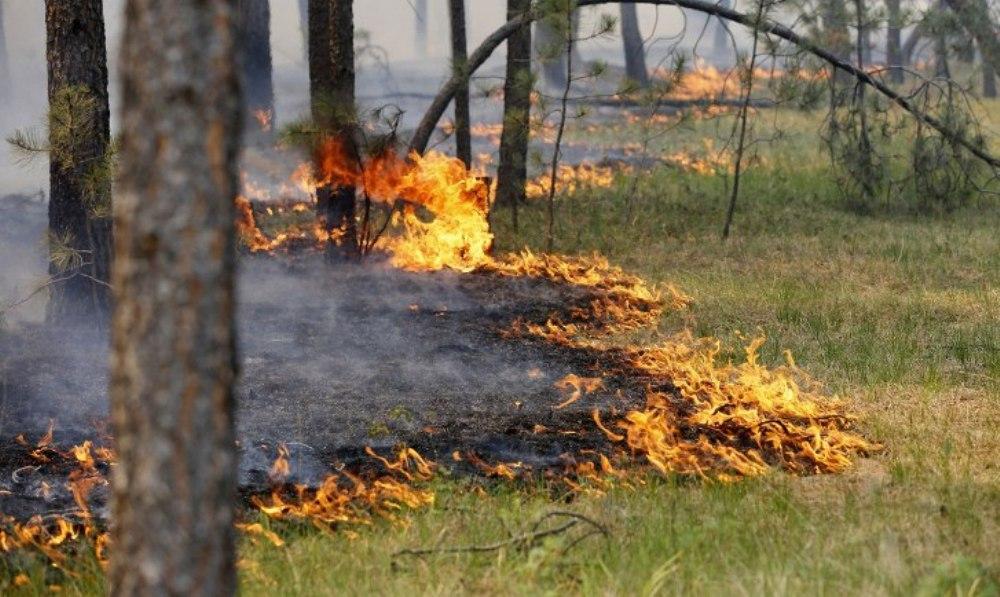 Контролируемые сельхозпалы не допустят возникновения масштабных пожаров