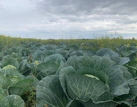 Хангаласские сельхозпроизводители объединяют свои усилия