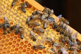Основы пчеловодства. Как начать свой бизнес?