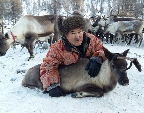 В Якутии проходит ежегодная корализация северных домашних оленей