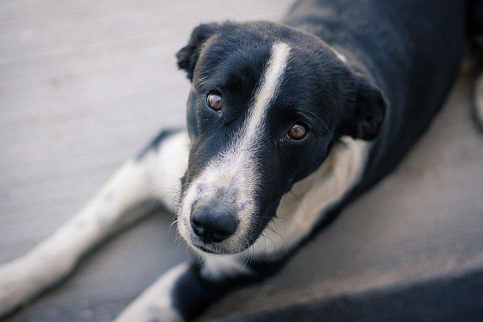 «Самовыгул» животных под запретом, к нарушителям применят штрафы