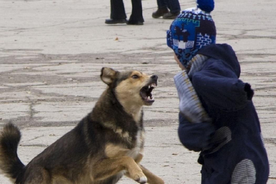 Сколько детей должны пострадать, чтобы республика выделила деньги муниципалитетам на содержание бродячих собак?!