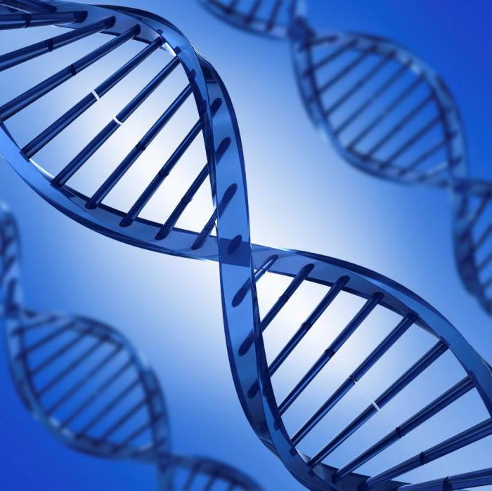 Ученые СВФУ: любой человек, независимо от национальности, является носителем патологических мутаций
