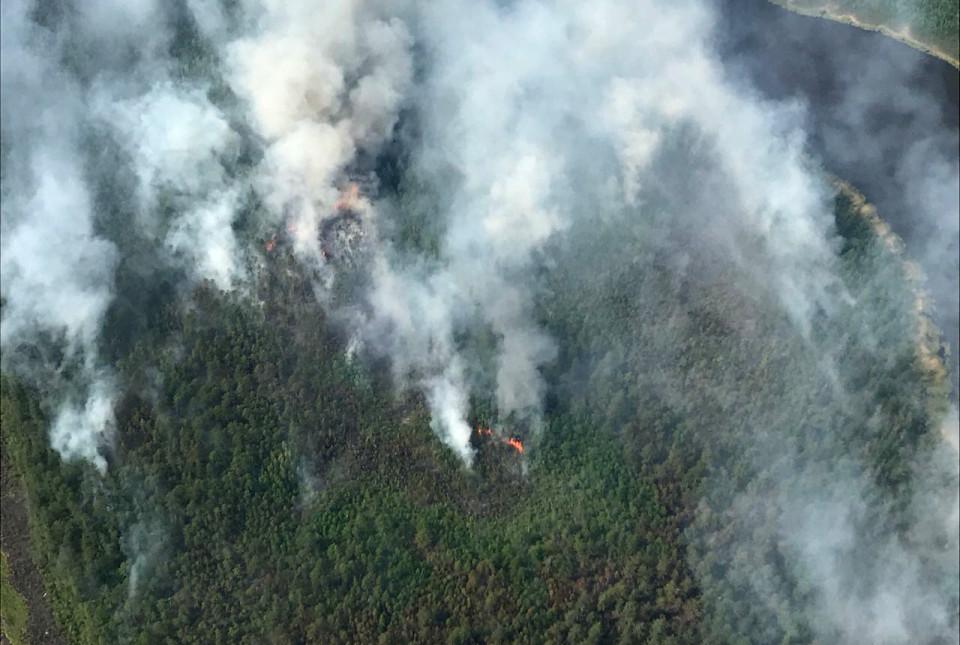 Ученые считают, что лесные пожары могут способствовать распространению пандемии