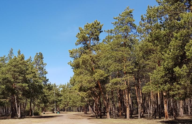 В Якутске с 1 по 11 мая будут введены ограничения на выезды горожан в пригородные лесные массивы