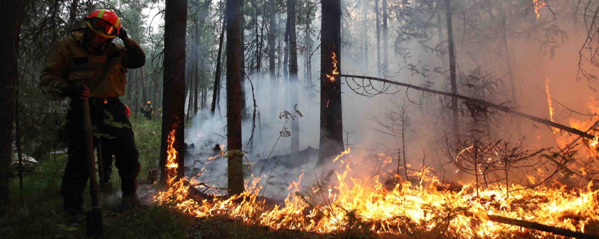 Жара только начинается, а леса горят