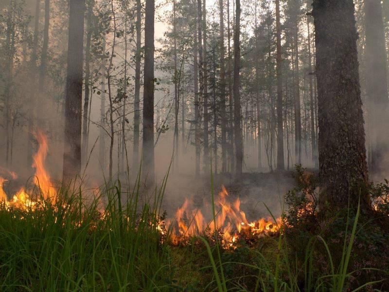 В Якутии за последние сутки ликвидировано четыре лесных пожара