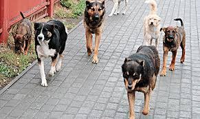 За полгода в травмпункт по укусам собак обратилось более 1000 человек