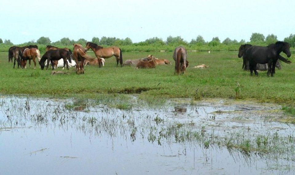 Дождевой паводок на Лене грозит затопить сенокосные угодья в ряде районов республики и в Якутске